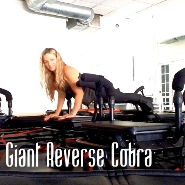 Giant Reverse Cobra